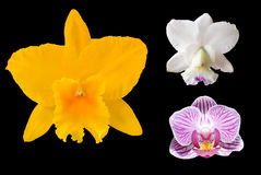 Three odchid flowers Royalty Free Stock Photo