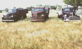Three Old Trucks. Three antique trucks in a field side by side Stock Photography