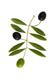 Three olives. Green and black olives with olive leaves isolated on white royalty free stock images
