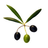 Three olives and three leaves. Green and black olives with olive leaves isolated on white stock images