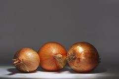 Three onions royalty free stock photography