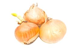 Three onions closeup on white Stock Image