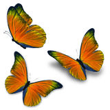 Three orange butterfly stock photography