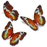 Three orange butterfly vector illustration