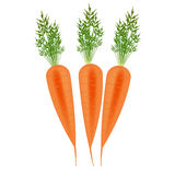 Three Orange carrots Stock Images