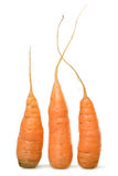 Three orange carrots. On white background Royalty Free Stock Image