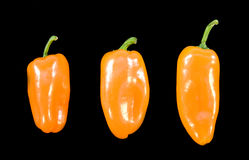 Three orange chillies on black background. With different sizes Royalty Free Stock Images