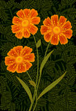 Three orange flowers Stock Photo