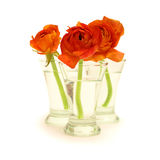 Three orange flowers in a vase with water Stock Image