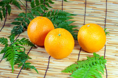 Three orange. Juice, fruit, vitamin C Royalty Free Stock Image