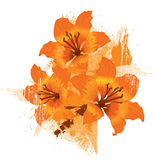 Three orange lily royalty free illustration