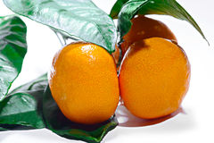 Three  orange ripe mandarin on a branch with leaves. Isolated on. Mandarins on the tree on white background Stock Photo