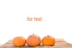 Three orange ripe pumpkins Royalty Free Stock Image