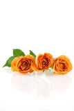 Three orange rose blossoms Stock Photo