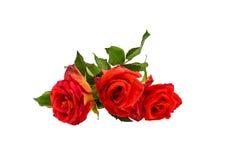 Three orange rose isolated on white.  stock photo