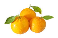 Three oranges with waterdrops Stock Photos