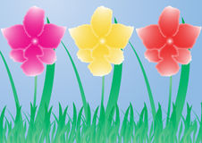 Three orchid. Pink, yellow and red orchid on blue background Royalty Free Stock Images