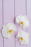 Three orchid blossoms Stock Images