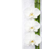 Three  orchids and branches of bamboo Royalty Free Stock Photography