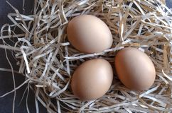 Three Organic Brown Eggs in Nest. Horizontal overhead view.  Promoting organic eggs, springtime, Easter, and healthy lifestyle royalty free stock image