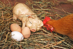 Three Organic Eggs in Farm Scene. Three organic eggs next to orange hen and ceramic pig on some hay Stock Images