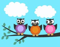 Three owls Stock Photos