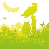 Three owls in the garden Stock Photos