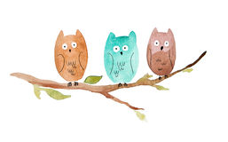 Three owls sitting on a branch. On white background. Watercolor illustration Stock Images