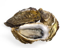 Three oysters on white Royalty Free Stock Image