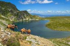 Three pack horses near the Kidney Lake. Kidney Lake is one of the Seven Rila Lakes, a group of glacial lakes in Rila National Park, Bulgaria Royalty Free Stock Photos