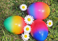 Three painted easter eggs in the garden. Three easter eggs in the garden, painted in rainbow colors, easter nest in the garden with blooming daisies royalty free stock photo