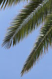 Three palm leaves. With sky background Stock Image