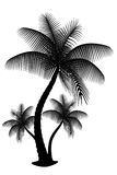Three palm silhouette isolate. Three black and white palm silhouette isolate royalty free illustration