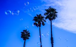 Three Palm Tree during Blue and White Cloudy Day Royalty Free Stock Photos