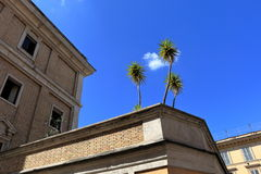 Three palm tree on a roof of ancient building Royalty Free Stock Photo