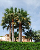 Three palm tree's in front of a Villa Stock Photo