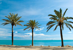 Three palm-trees Stock Photography