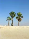 Three palm trees. On the edge of a beach in Marina, Egypt stock photos
