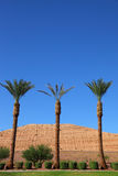 Three palm trees Royalty Free Stock Photography