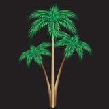 Three palm trees. Stock Photo