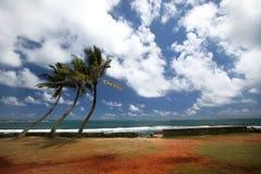 Three Palm Trees Royalty Free Stock Image