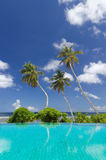Three palm trees against a blue sky and ocean. Three tropical palm trees against the background of a blue sky and ocean, and turquoise swimming-pool water on a Stock Photography