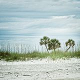 Three Palm Trees on a Beach Royalty Free Stock Photo