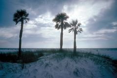Three palm trees on beach with sunset in background Royalty Free Stock Photography
