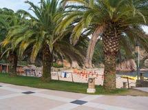 Three palm trees Royalty Free Stock Photo