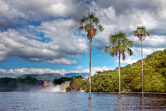 Three palm trees in the middle of the lake. In Canaima park with Royalty Free Stock Photos
