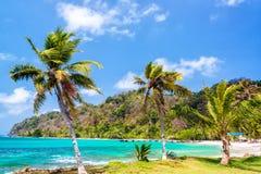 Three Palm Trees in Panama Royalty Free Stock Photography