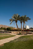 Three palm trees on site. Stock Images