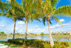 Three palms royalty free stock images