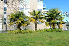 Three palms. In front of the building Royalty Free Stock Photography